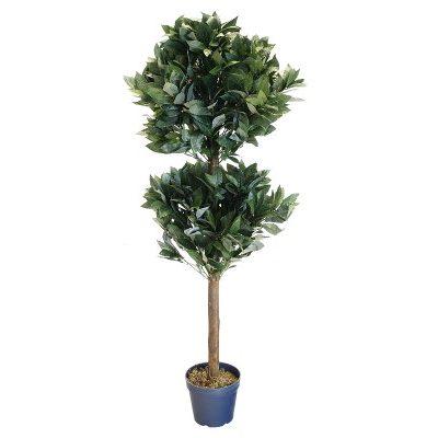 tr916_bay_tree (1)